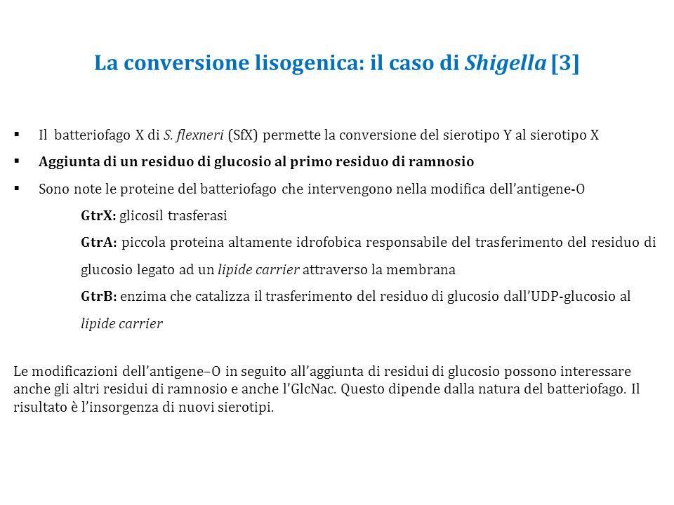 La conversione lisogenica: il caso di Shigella [3]
